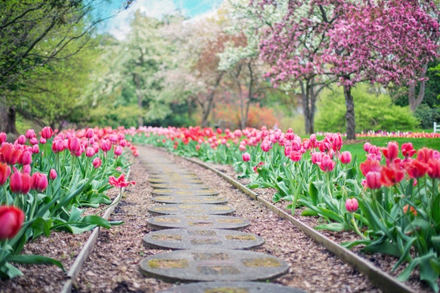 walkway lined with flowers