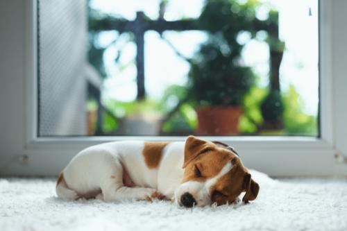 Puppy lying in front of exterior door